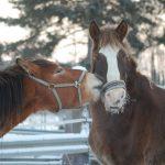 春のG1に向けて注目の3重賞と、先週の馬場傾向(2月4,5日)と、今週の馬場予想(2月11,12日)